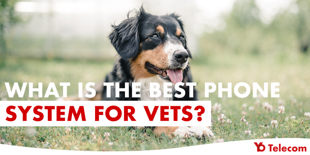Phone System for Vets